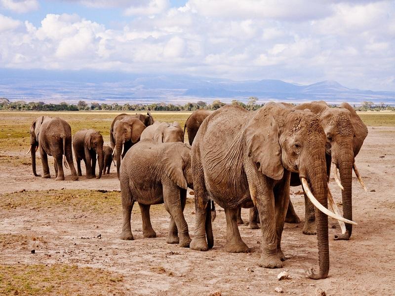 Photo of an elephant family walking in Kenya's Amboseli National Park