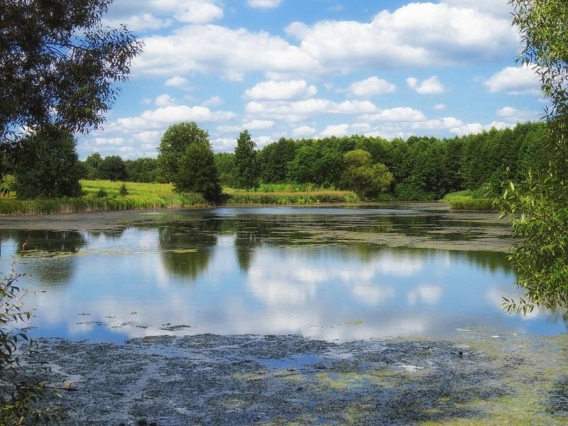 Photo of a pond in Ukraine
