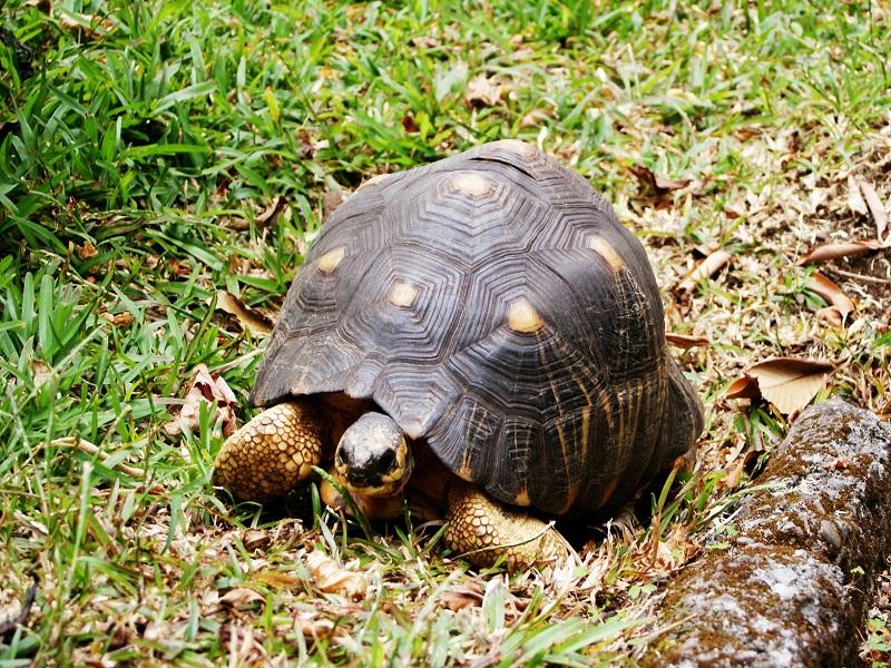 Image of wildlife common on reunion islands
